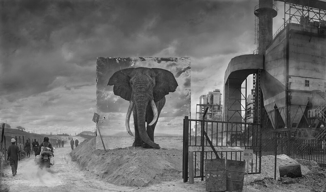 fotografia-africa-distruzione-animali-selvatici-nick-brandt-03