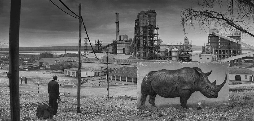 fotografia-africa-distruzione-animali-selvatici-nick-brandt-05