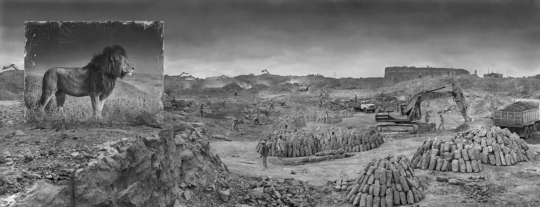 fotografia-africa-distruzione-animali-selvatici-nick-brandt-07