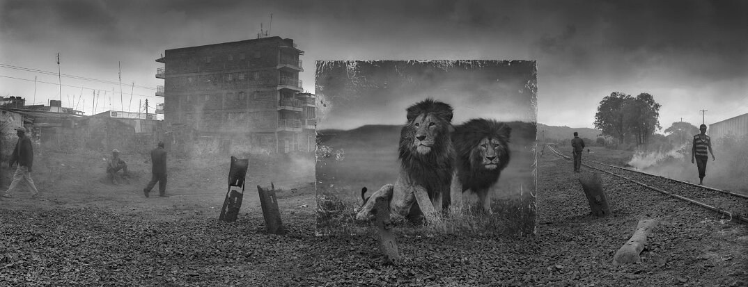fotografia-africa-distruzione-animali-selvatici-nick-brandt-08