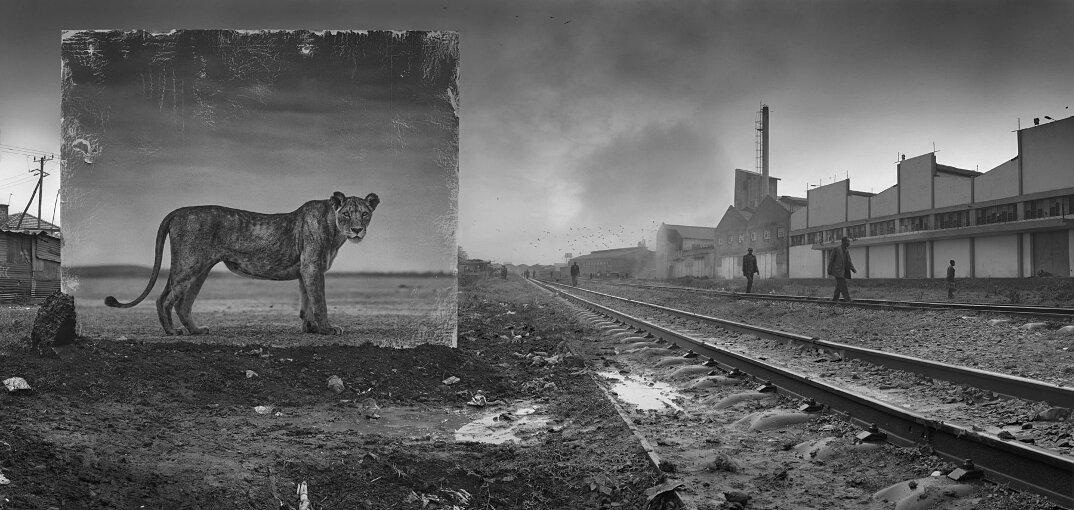 fotografia-africa-distruzione-animali-selvatici-nick-brandt-09