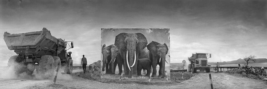 fotografia-africa-distruzione-animali-selvatici-nick-brandt-10