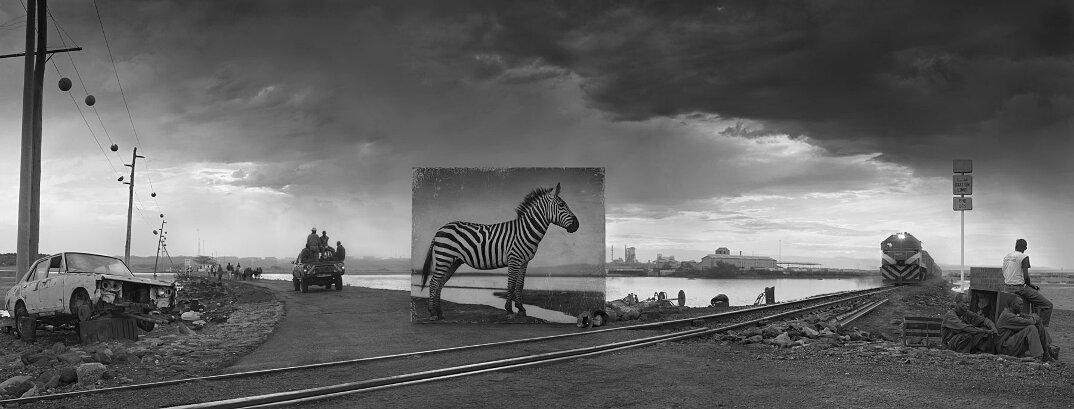 fotografia-africa-distruzione-animali-selvatici-nick-brandt-11