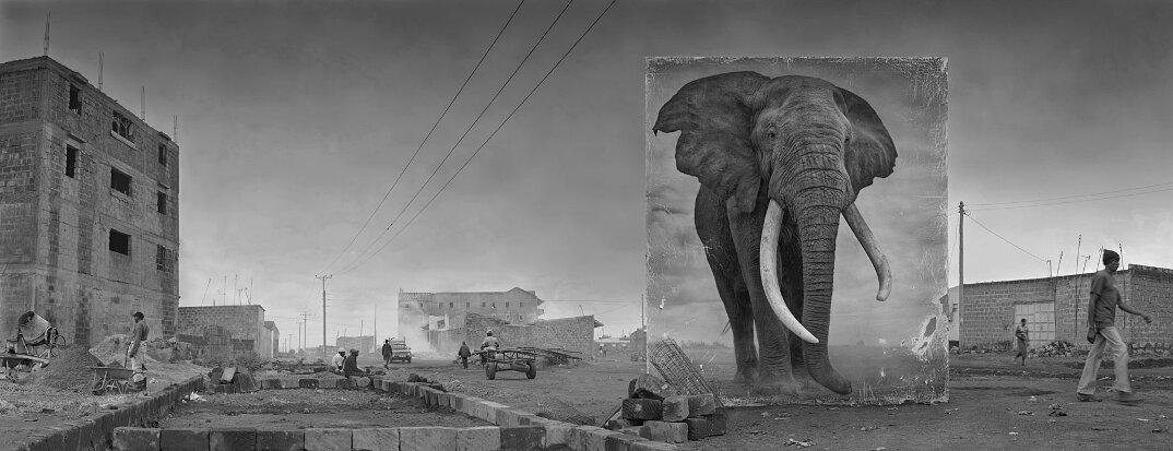 fotografia-africa-distruzione-animali-selvatici-nick-brandt-12