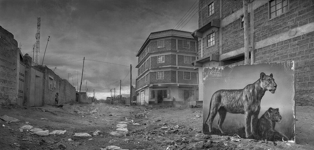 fotografia-africa-distruzione-animali-selvatici-nick-brandt-13
