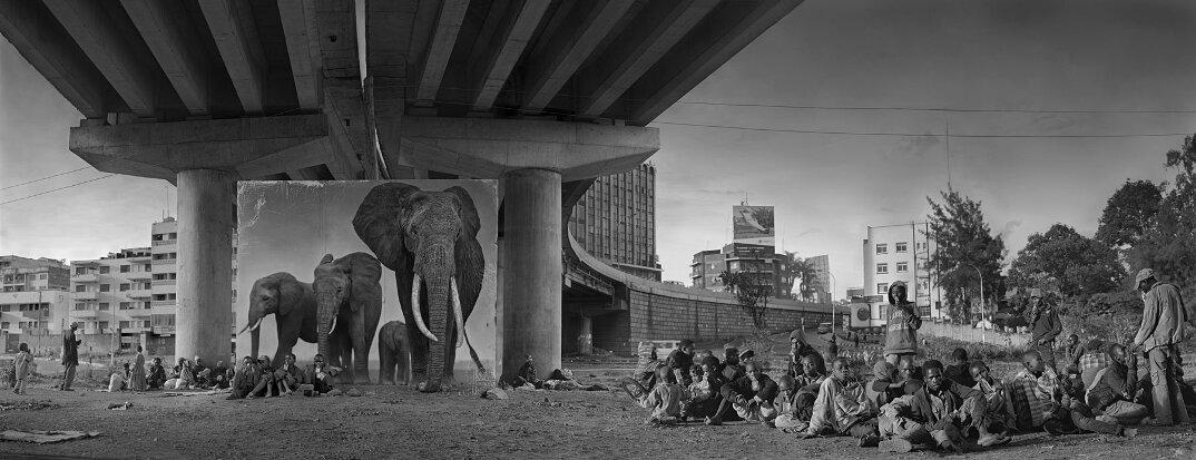 fotografia-africa-distruzione-animali-selvatici-nick-brandt-14