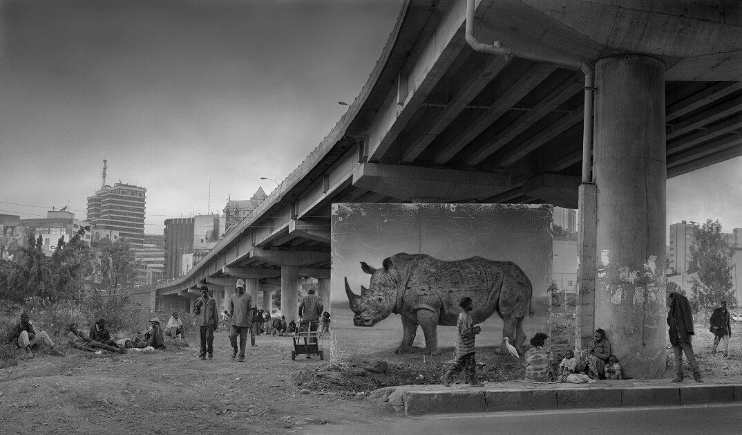 fotografia-africa-distruzione-animali-selvatici-nick-brandt-15