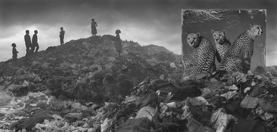 fotografia-africa-distruzione-animali-selvatici-nick-brandt-16
