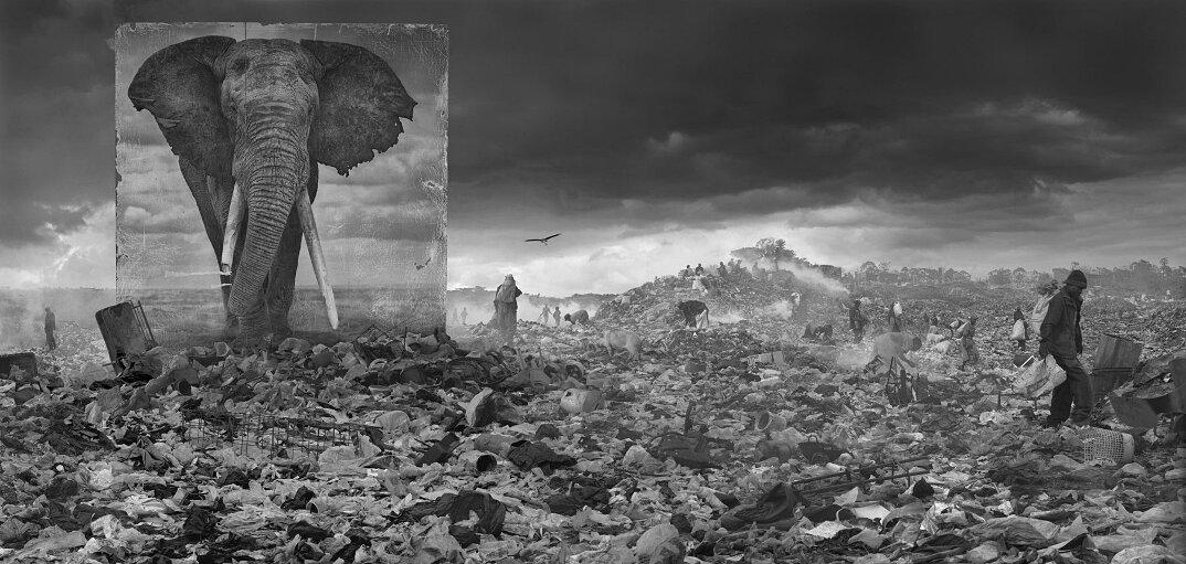 fotografia-africa-distruzione-animali-selvatici-nick-brandt-17