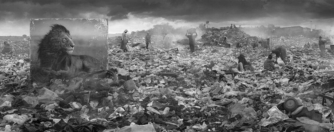 fotografia-africa-distruzione-animali-selvatici-nick-brandt-18
