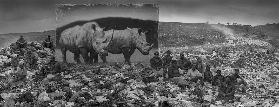 fotografia-africa-distruzione-animali-selvatici-nick-brandt-19