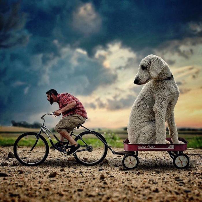 fotografia-photoshop-cane-gigante-avventure-juji-christopher-cline-01