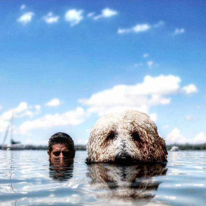 fotografia-photoshop-cane-gigante-avventure-juji-christopher-cline-04