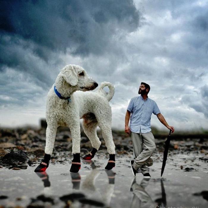 fotografia-photoshop-cane-gigante-avventure-juji-christopher-cline-05
