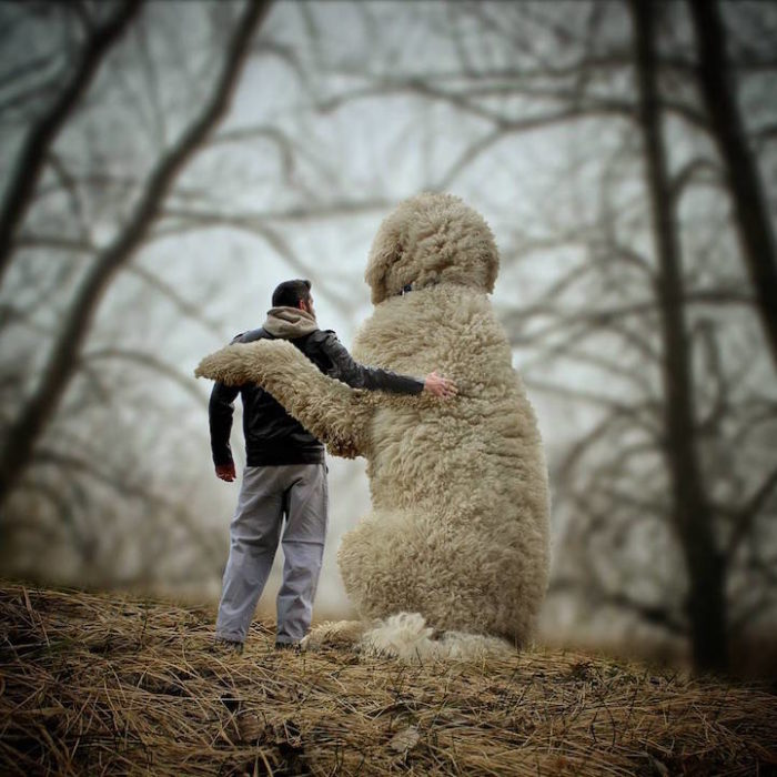 fotografia-photoshop-cane-gigante-avventure-juji-christopher-cline-11