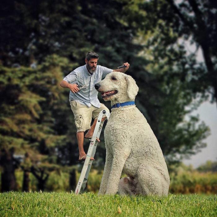 fotografia-photoshop-cane-gigante-avventure-juji-christopher-cline-21