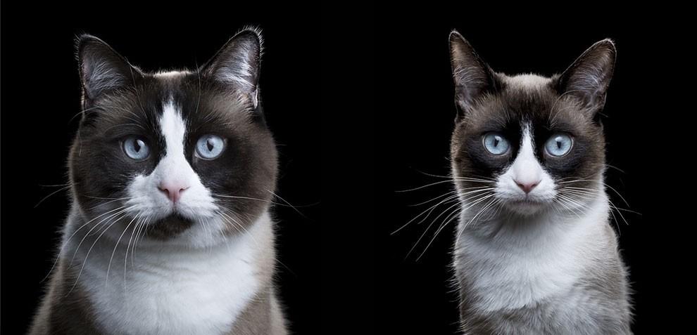 fotografia-ritratti-gatti-robert-bahou-12