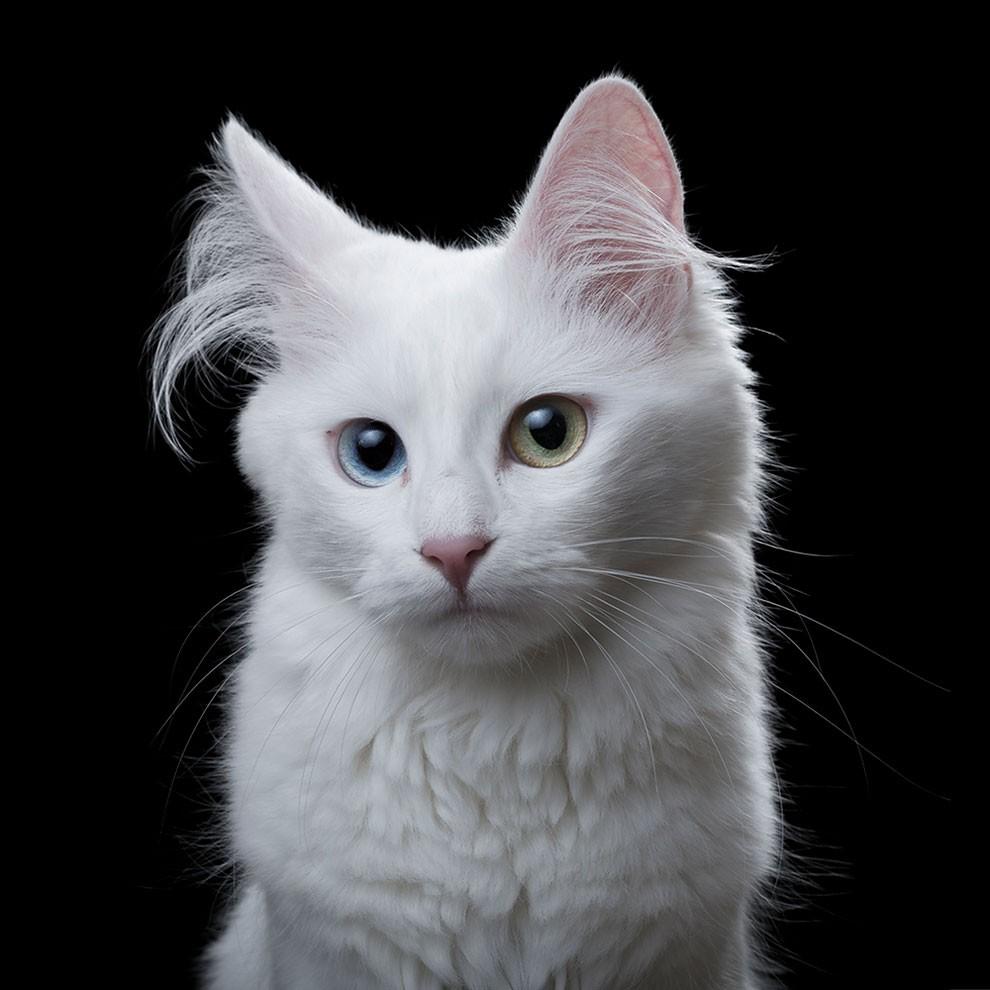 fotografia-ritratti-gatti-robert-bahou-15