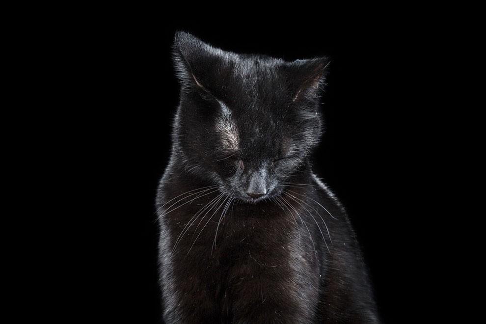 fotografia-ritratti-gatti-robert-bahou-16