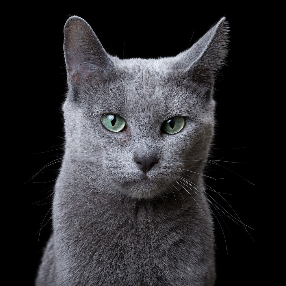 fotografia-ritratti-gatti-robert-bahou-17
