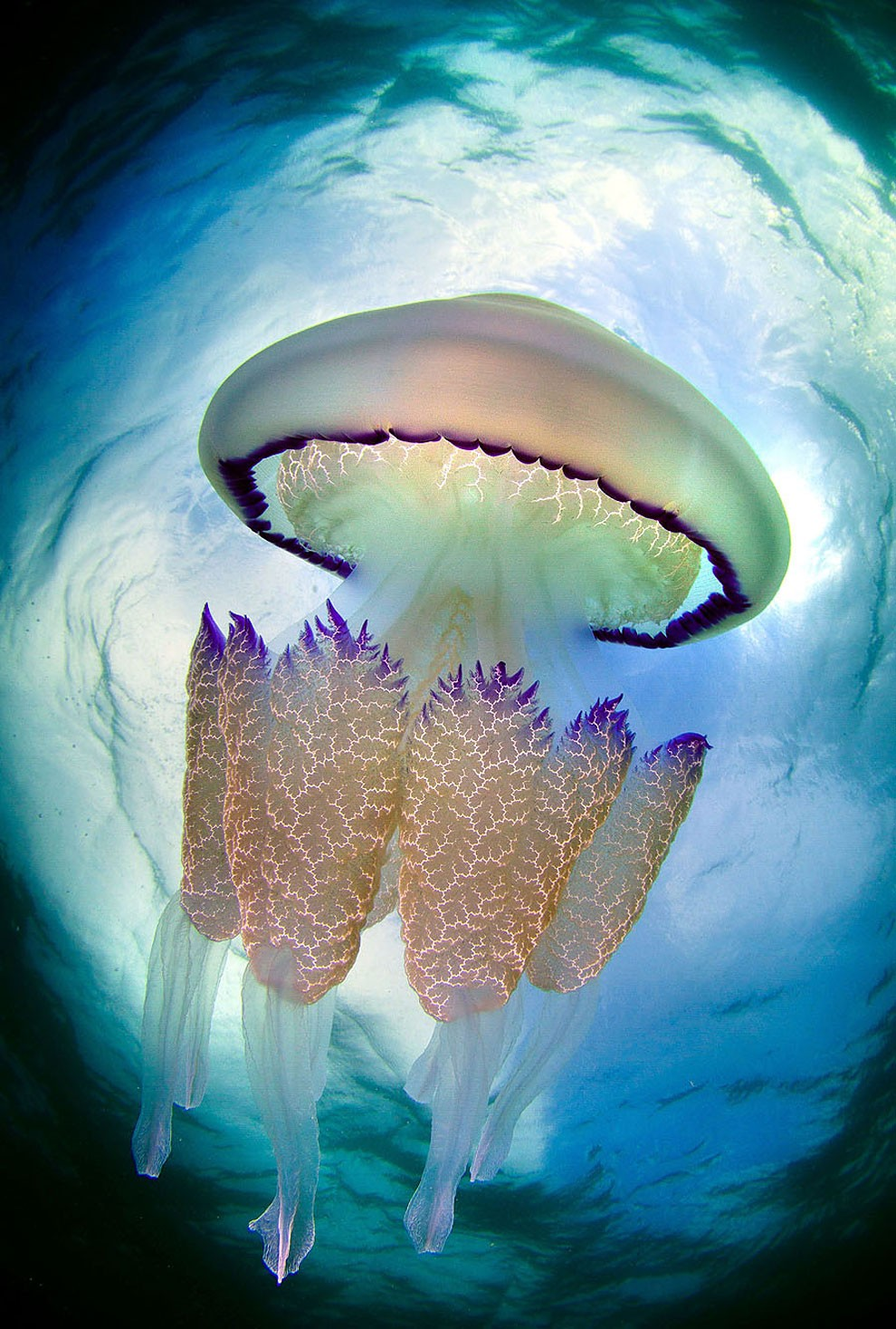 fotografia-subacquea-meduse-spagna-jordi-benitez-castells-02