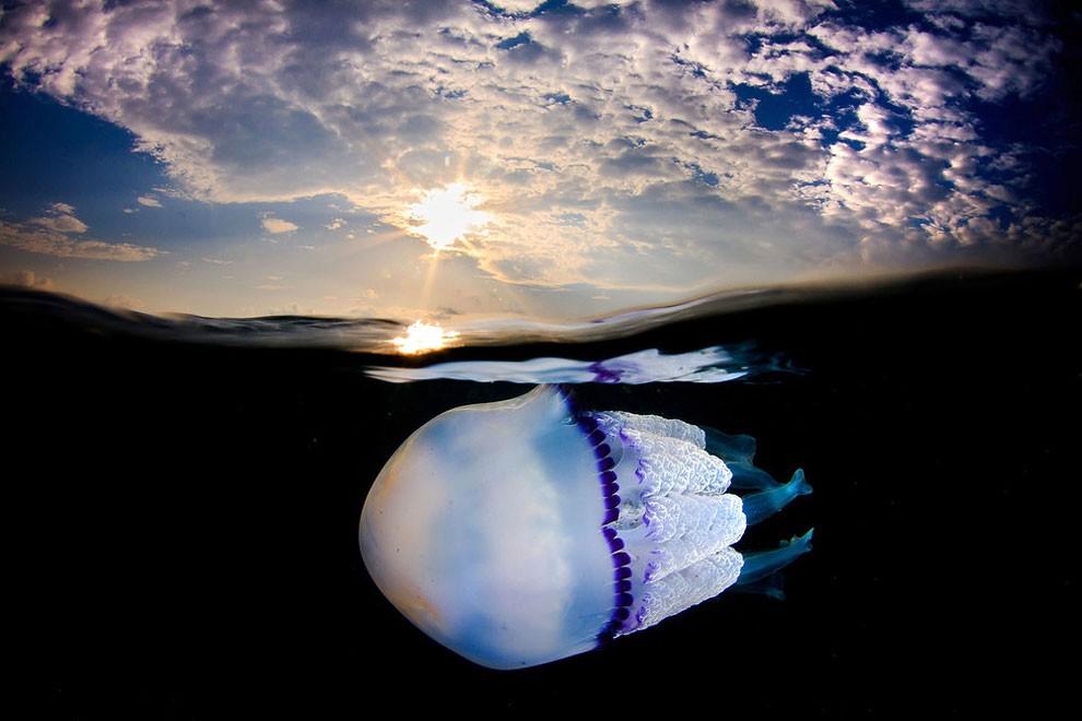 fotografia-subacquea-meduse-spagna-jordi-benitez-castells-05