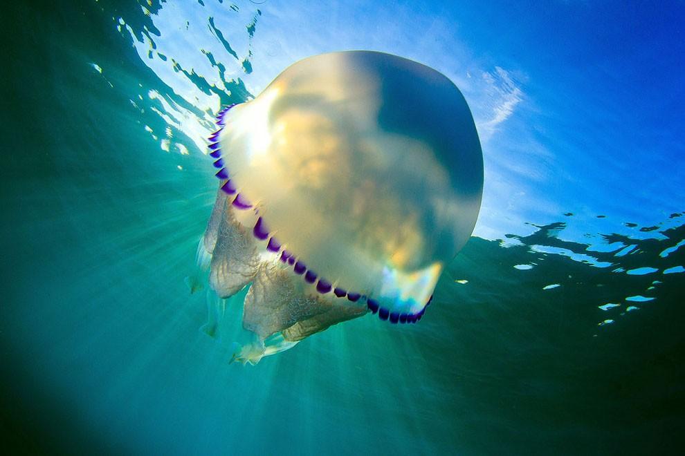 fotografia-subacquea-meduse-spagna-jordi-benitez-castells-06