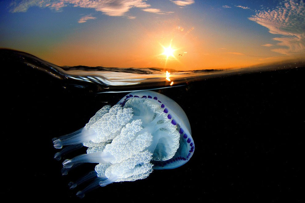 fotografia-subacquea-meduse-spagna-jordi-benitez-castells-07