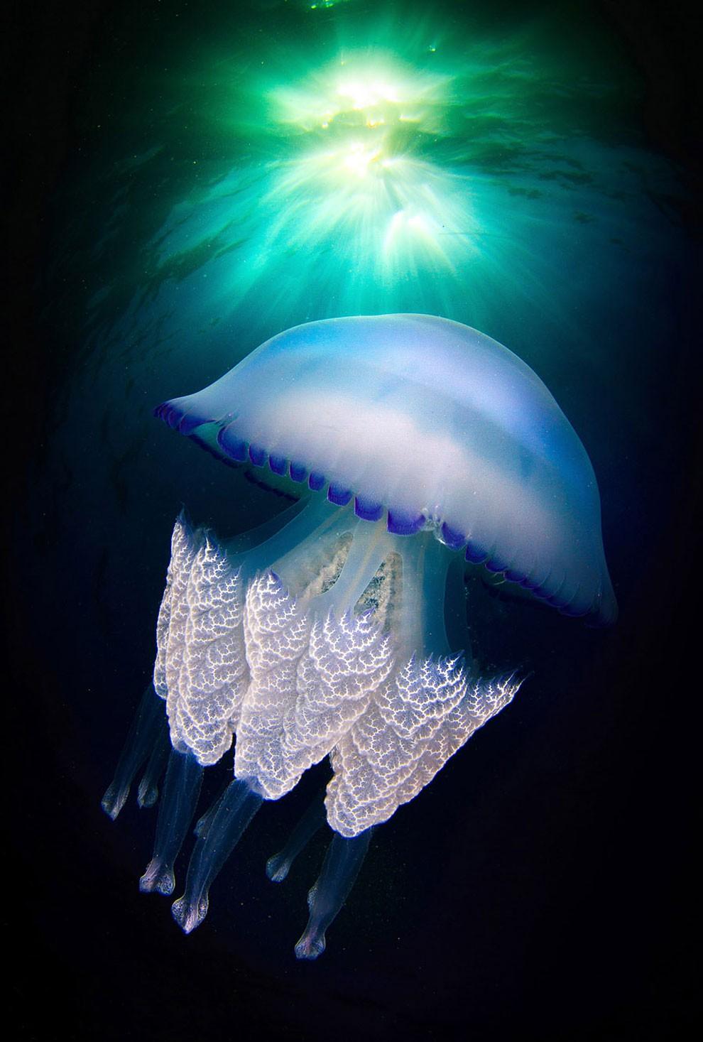 fotografia-subacquea-meduse-spagna-jordi-benitez-castells-12