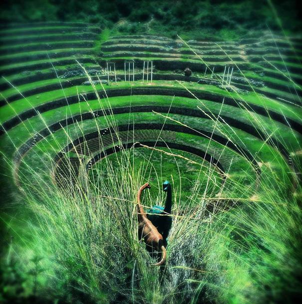 fotografia-viaggi-dinosauri-giocattoli-dinodinaseries-jorge-saenz-09