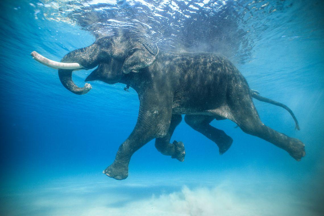 fotografia-viaggi-mondo-jody-macdonald-india