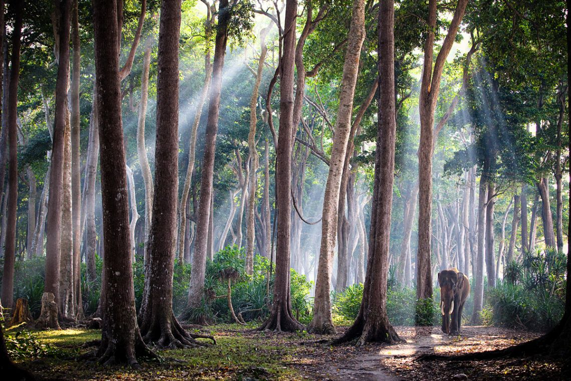 fotografia-viaggi-mondo-jody-macdonald-india1