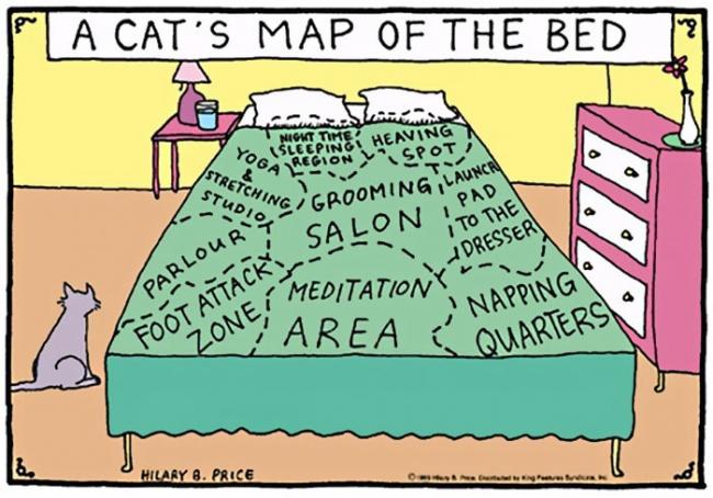fumetti-divertenti-comportamento-gatti-in-casa-08