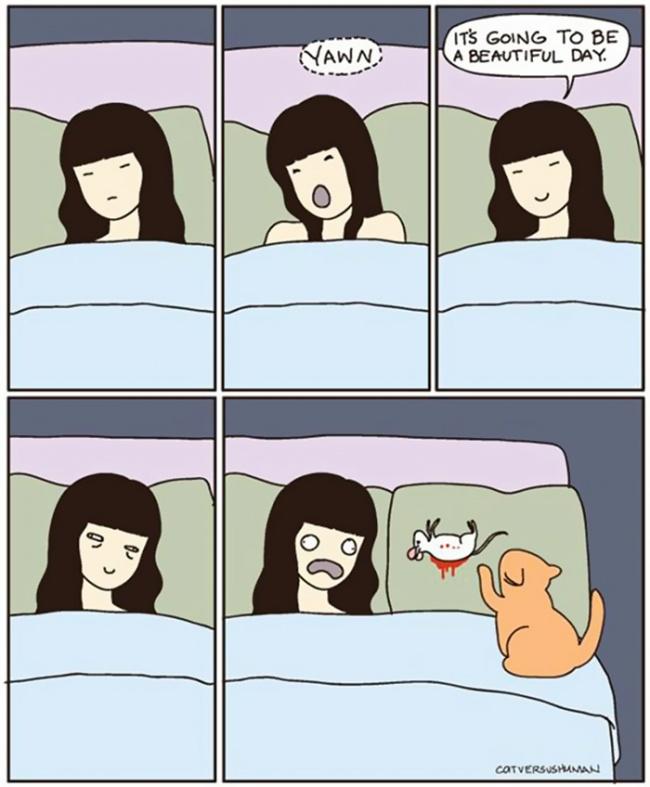 fumetti-divertenti-comportamento-gatti-in-casa-09