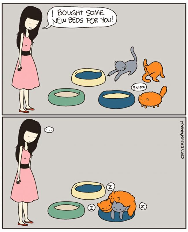 fumetti-divertenti-comportamento-gatti-in-casa-12