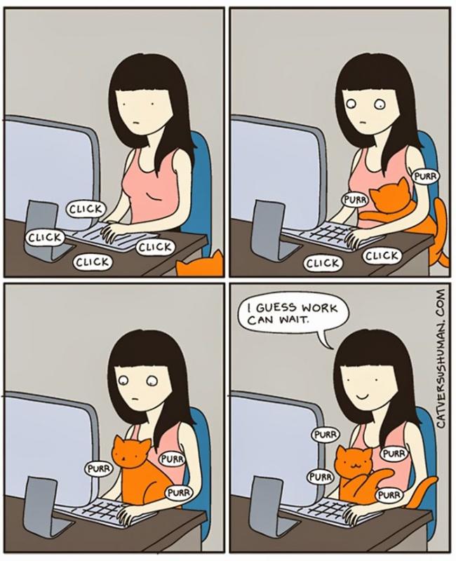 fumetti-divertenti-comportamento-gatti-in-casa-13