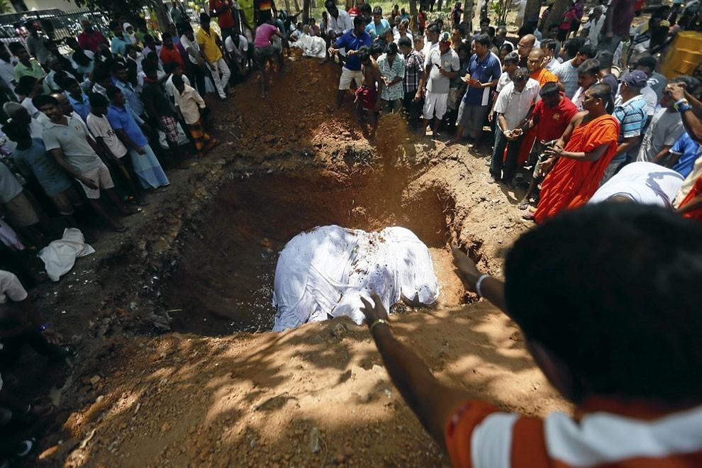 funerale-elefante-tempio-buddista-colombo-sri-lanka-02