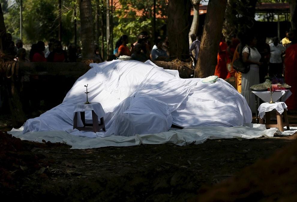 funerale-elefante-tempio-buddista-colombo-sri-lanka-06