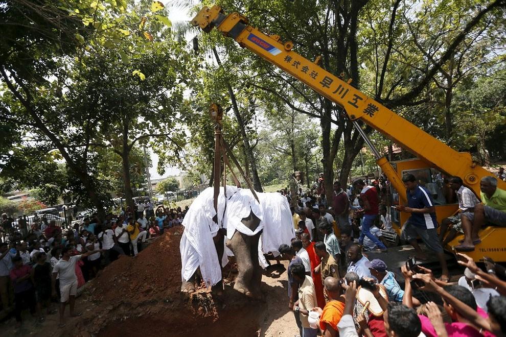 funerale-elefante-tempio-buddista-colombo-sri-lanka-07