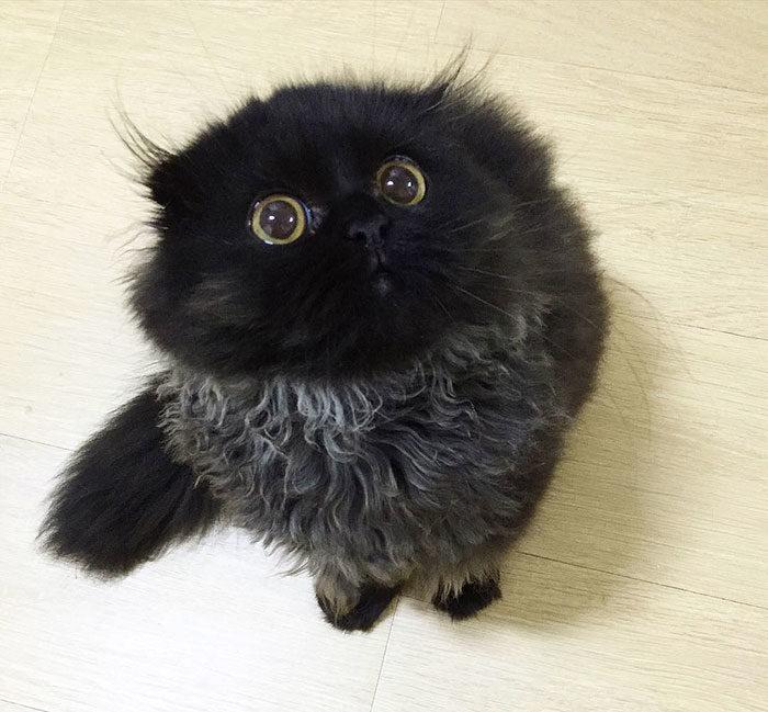 peloso micio nero donne video