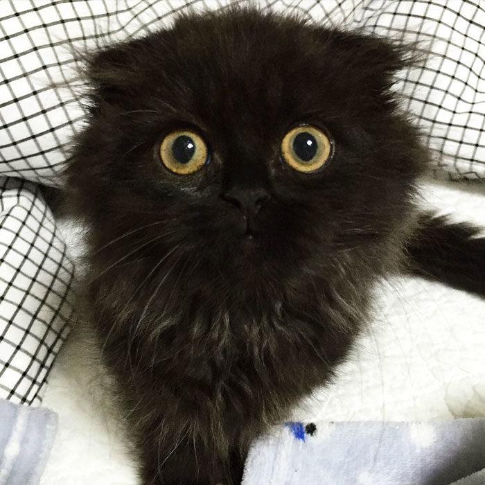 gatto-nero-occhi-grandi-gimo-05