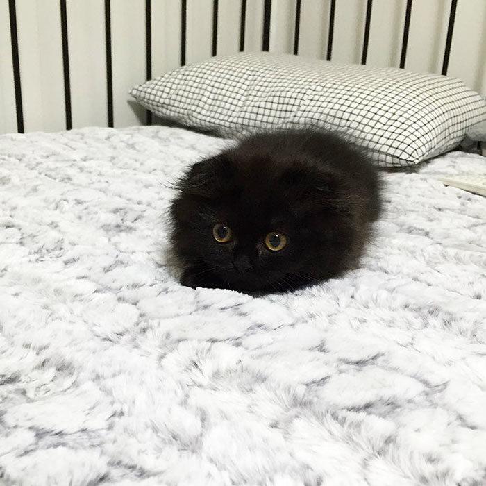 Gimo il gatto con gli occhi pi grandi del mondo keblog for Gatti con occhi diversi