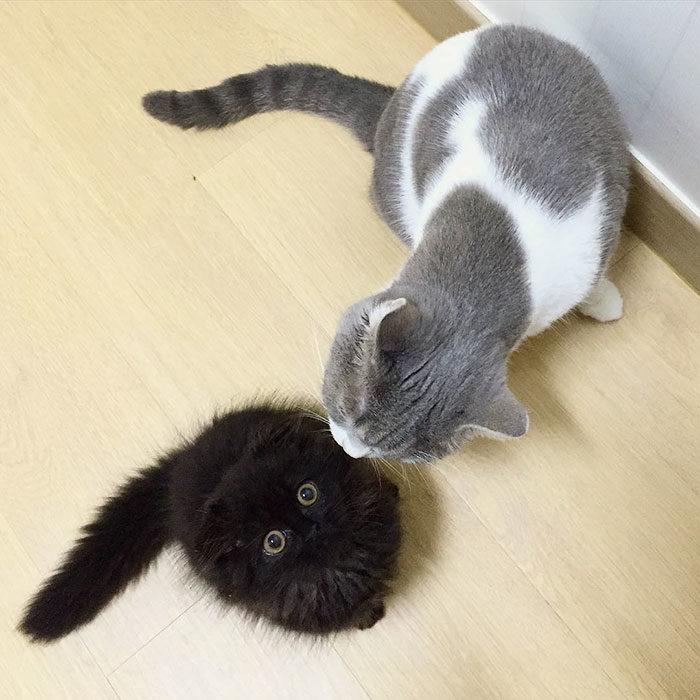 gatto-nero-occhi-grandi-gimo-08