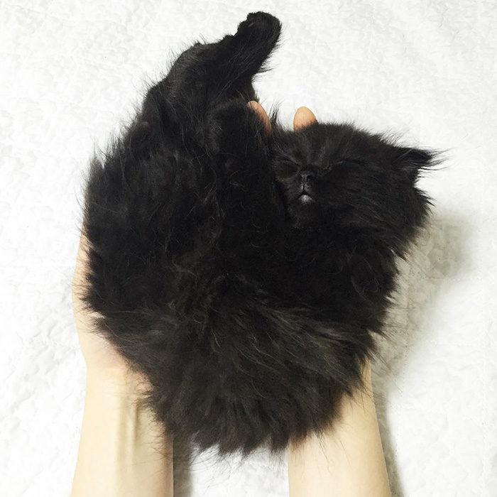 gatto-nero-occhi-grandi-gimo-09