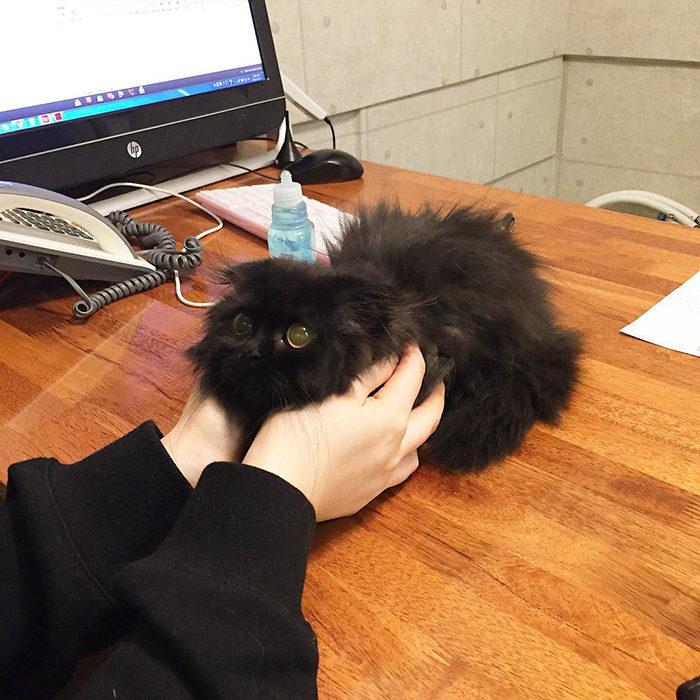 gatto-nero-occhi-grandi-gimo-10