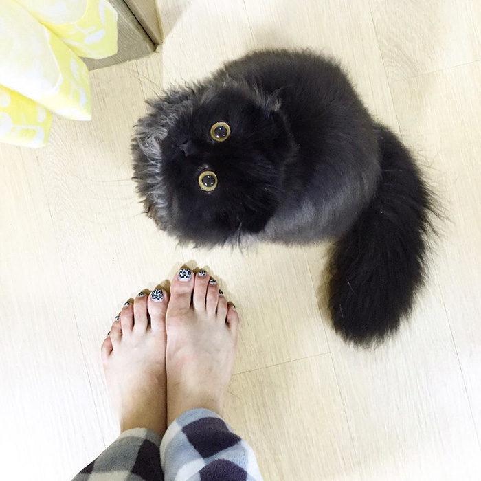 gatto-nero-occhi-grandi-gimo-12