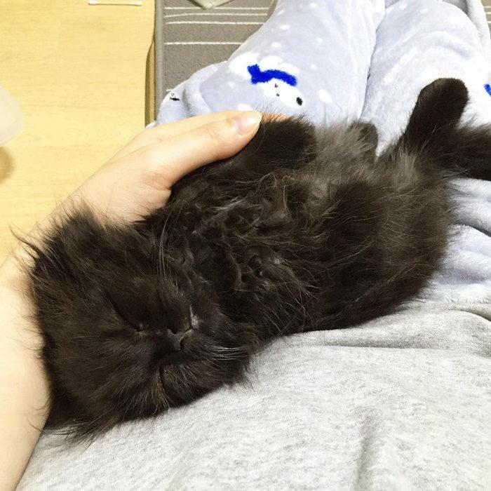 gatto-nero-occhi-grandi-gimo-13
