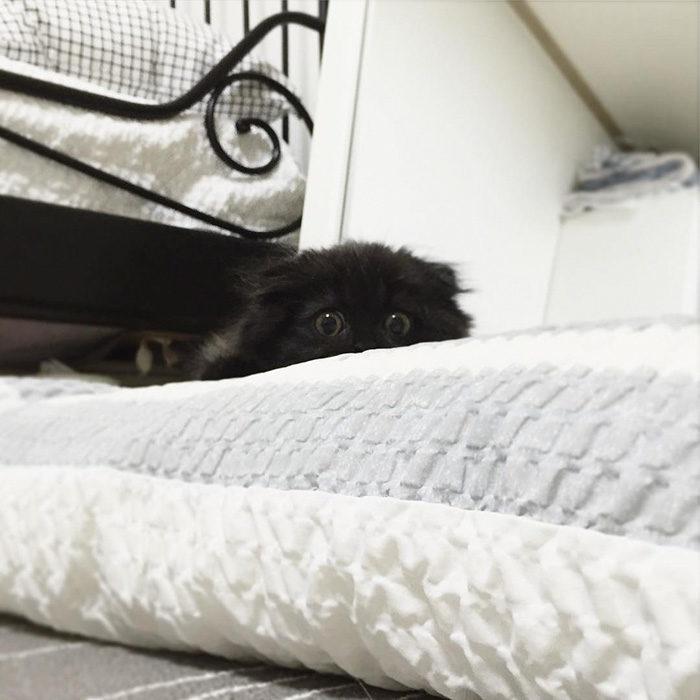 gatto-nero-occhi-grandi-gimo-14