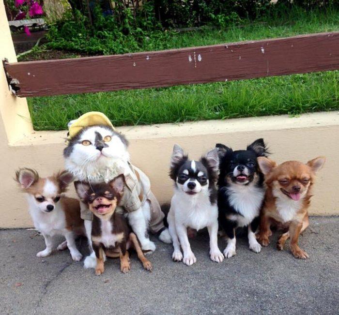 gatto-protegge-cuccioli-chihuahua-yuta-family-richie-4