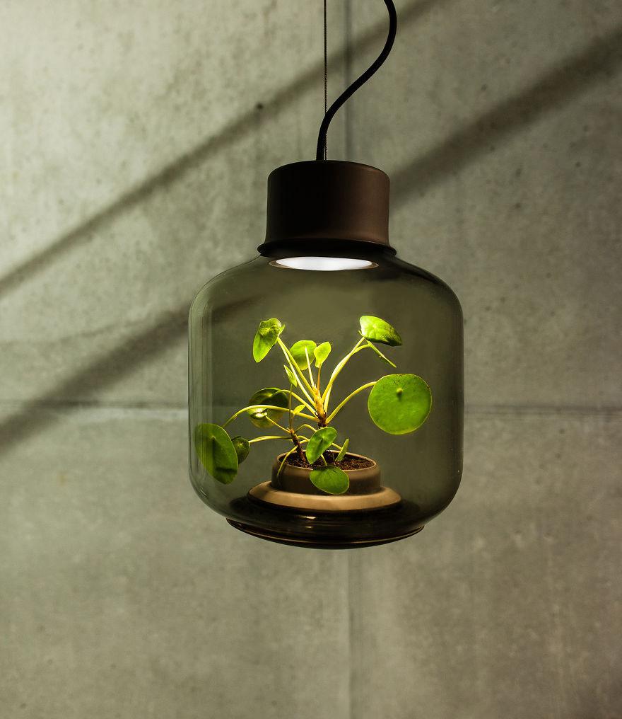 lampade-fanno-crescere-piante-2